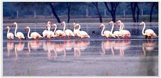 Flamingos in winter
