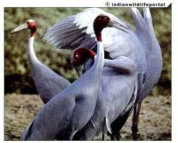 The Saurus Crane