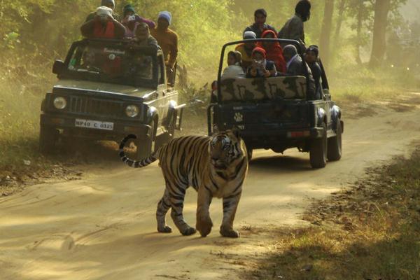 Jeep Safari at Bandhavgarh National Park