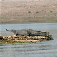 The Chambal Sanctuary