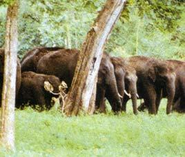 Papikonda Sanctuary2