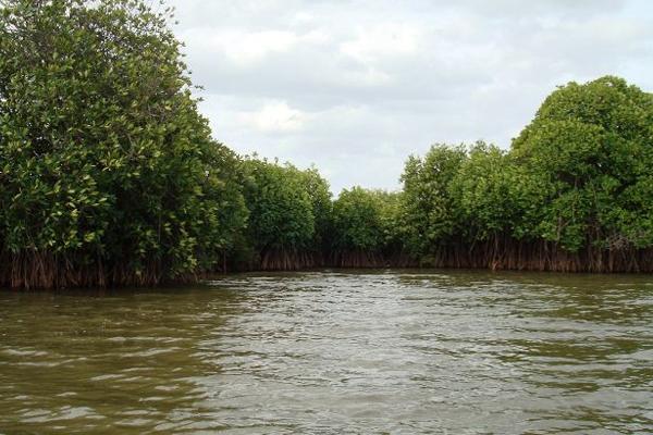 Pichavaram Mangrove Forest Chidambaram