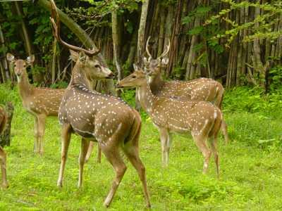 Anamalai Wildlife Sanctuary