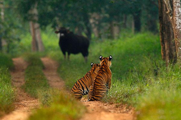 Bhadra Wildlife Sanctuary Chikmagalur