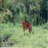 Bhandra Wildlife Sanctuary