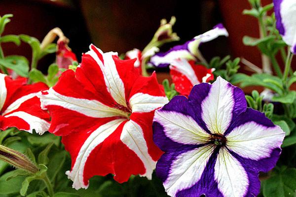 Botanical Garden Darjeeling