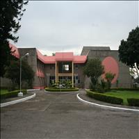 Wadia Institute