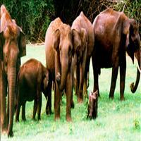 Wildlife of Idukki