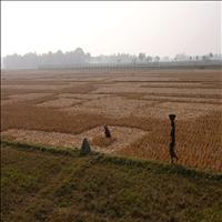 The Indo - Bangla Border
