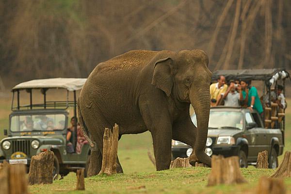 Jungle Safari Kabini