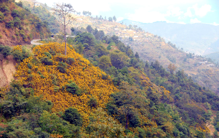 Flower decked slopes of the Kohima hills