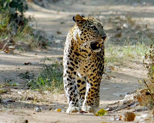 Wildlife Sanctuary Kumbhalgarh