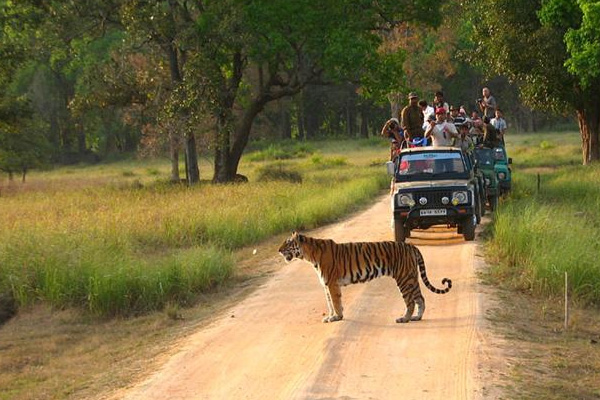 Jeep Safari At Kanha National Park