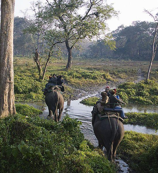 The Jaldapara Wildlfe Sanctuary