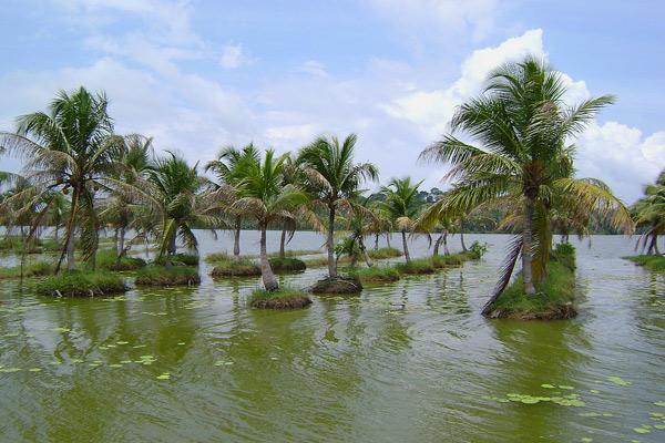 Vellayani Lake Kovalam