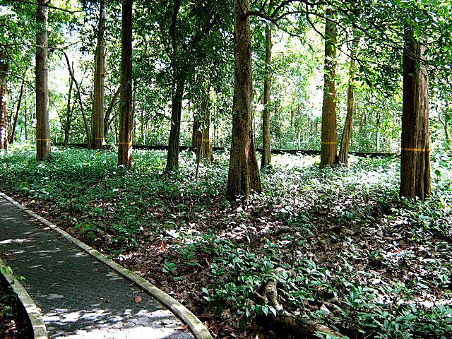 Nilambur (Forest area)