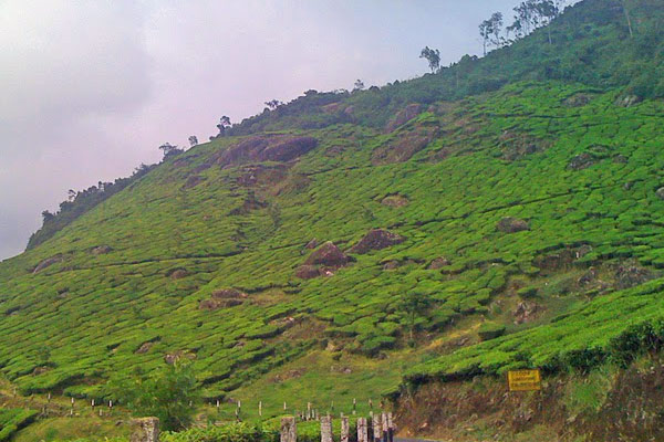 Pothamedu Point Munnar