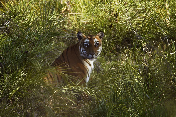 Bandipura Wildlife Sanctuary