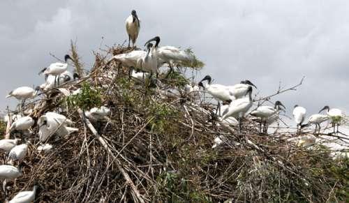 Nelapattu Bird Sanctuary