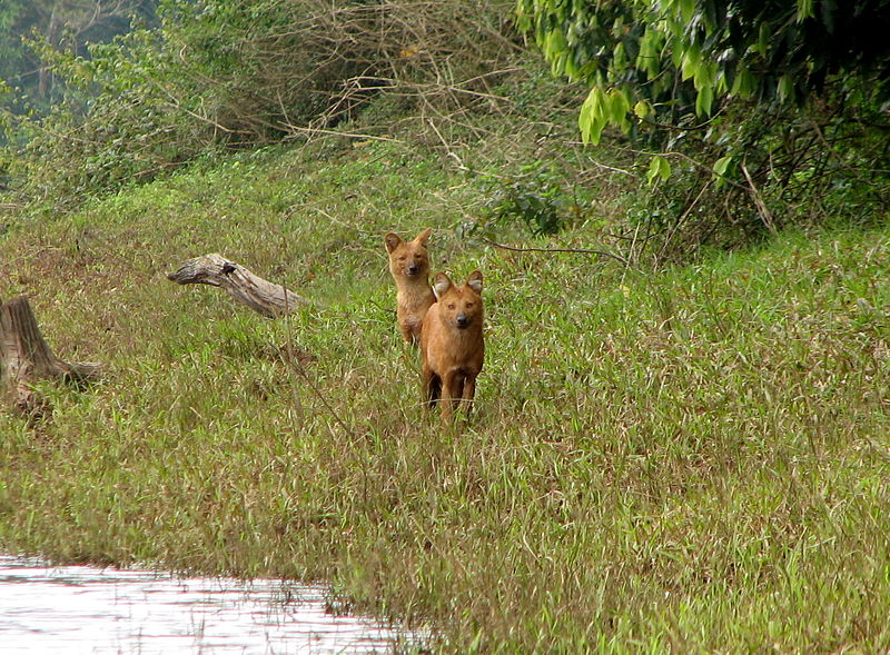 Wildlife Attractions in Periyar National Park