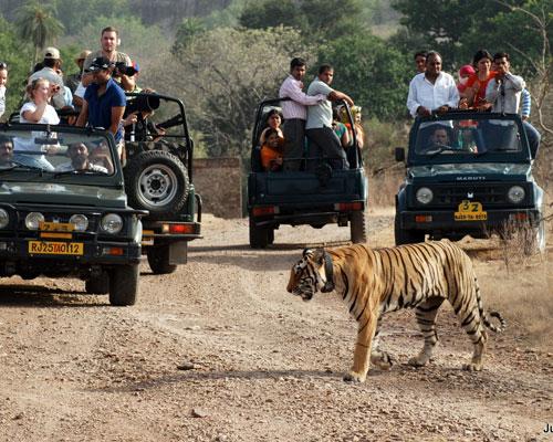 Ranthambore National Park Swai Madhopur