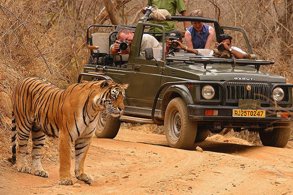 Jeep Safari at Ranthambore National Park