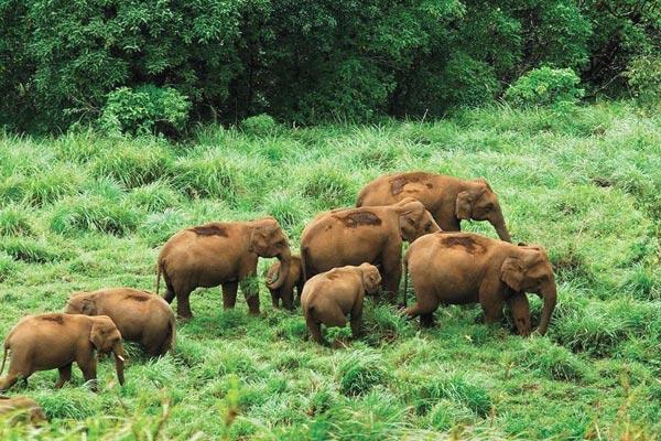 Wildlife Sanctuary Thekkady
