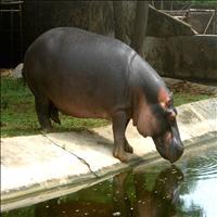 Indira Gandhi Zoological Park