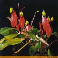 National Orchidarium